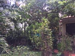 Beautifull 3 bedrooms house in Tu Hoa , Tay Ho dist., available for rent